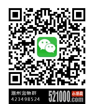 潮州宠物群:423498524.jpg